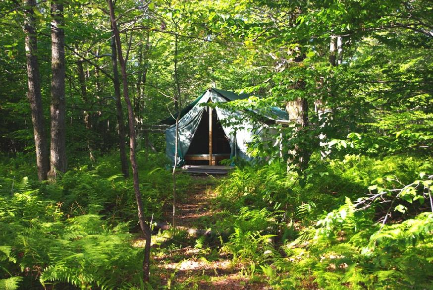 874_maples_left_tent_far